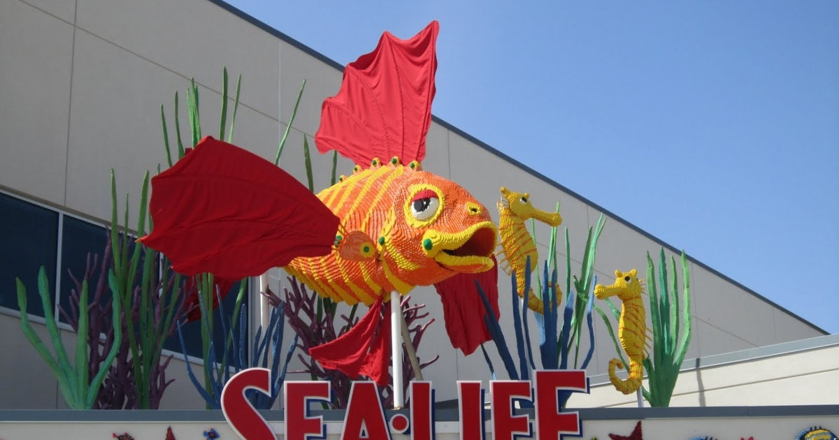 Legoland california sea life aquarium entrada para 2 for Precio entrada aquarium
