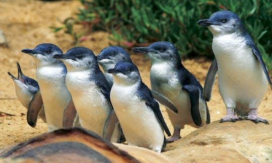 Ilha Phillip - Pinguins, Coalas e Vida Selvagem