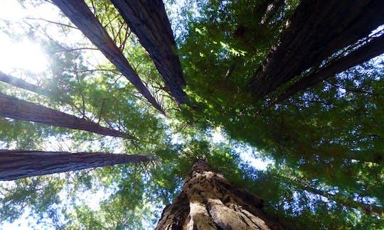 Muir Woods en wijnland-dagtour vanuit San Francisco