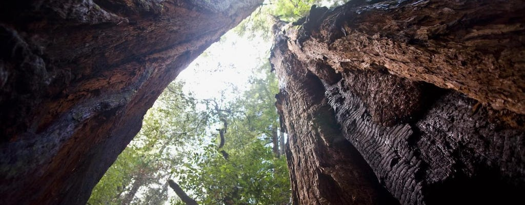 Muir Woods and Sausalito guided tour with transportation
