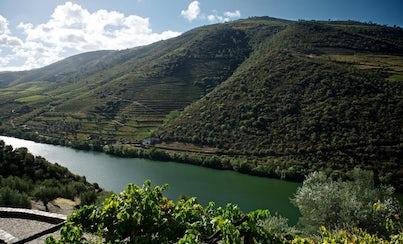 Gastronomía,Tours enológicos,Otros gastronomía,Cata de vinos,Excursión a Valle del Duero,Con visita a bodegas incluida