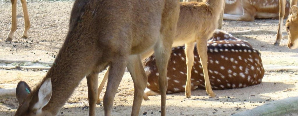 Zwiedzanie Lizbony w stylu hop-on-hop-off oraz Zoo w Lizbonie