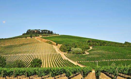 Tour a Carmignano con sommelier, visita di 2 cantine e degustazione di 3 vini