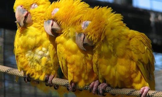 Zoo de Barcelona: Bilhetes