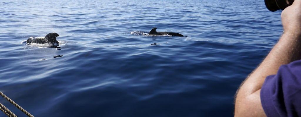 Wyprawa na wieloryby z Reykjaviku z przesiadką hotelową