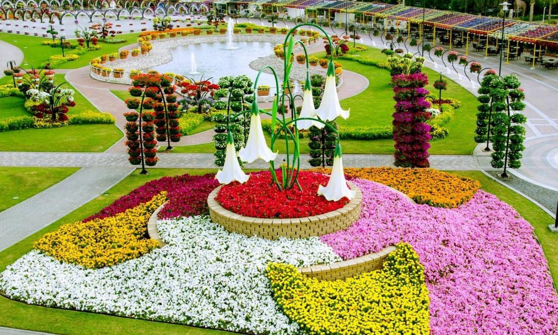 Visit the fauna and flora of dubai with this nature tour for Home garden design dubai