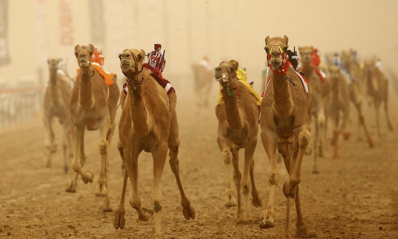 Salir de la ciudad,Excursiones de un día,Excursión a Al Ain