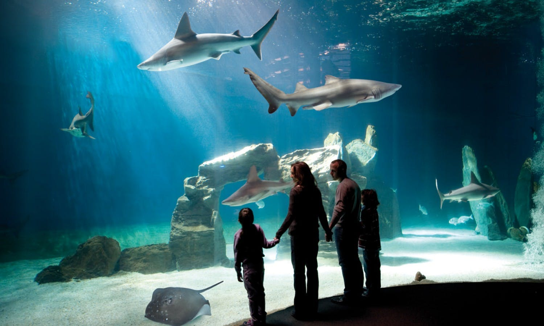 Skip-the-line tickets for Aquarium of Genoa