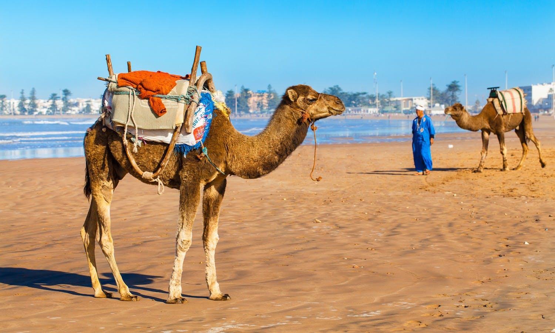 Day tour of Essaouira from Marrakech