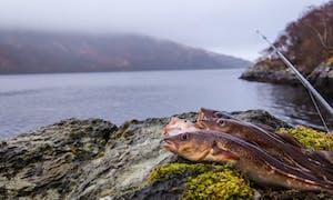 Guided Fly Fishing Safari In Scotland