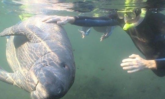 Nager avec un jour de lamantins d'Orlando