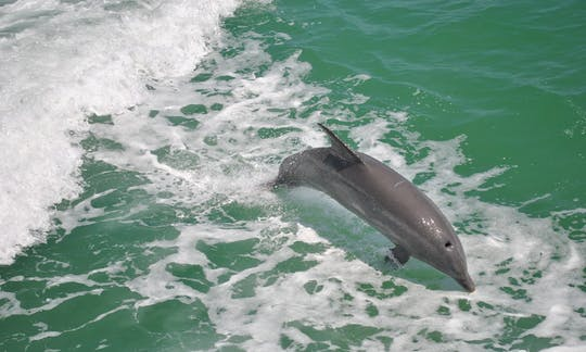 Clearwater Beach: dolphin encounter boat cruise with lunch