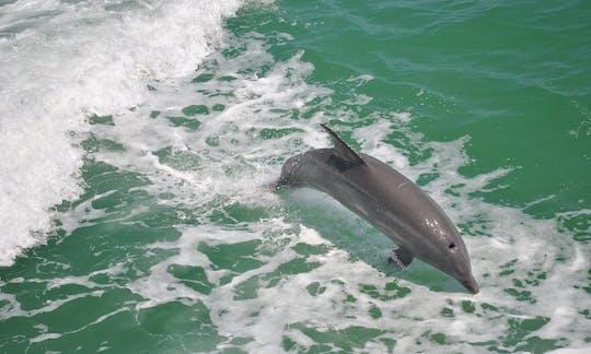 Клеарватере Бич: встреча Дельфин круиз на лодке с обедом