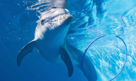 Winter the Dolphin Experience in Clearwater Beach with lunch and transportation