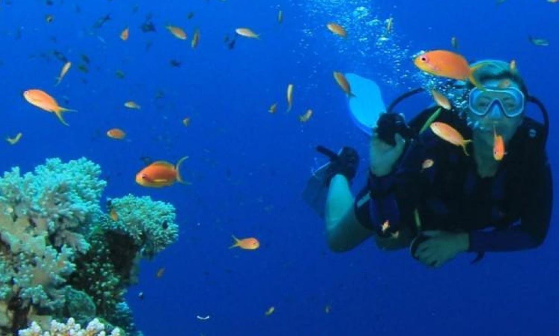 Salir de la ciudad,Actividades,Excursiones de un día,Actividades acuáticas,Excursión a Key West