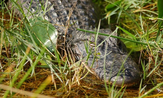 Everglades airboat adventure tour with transportation
