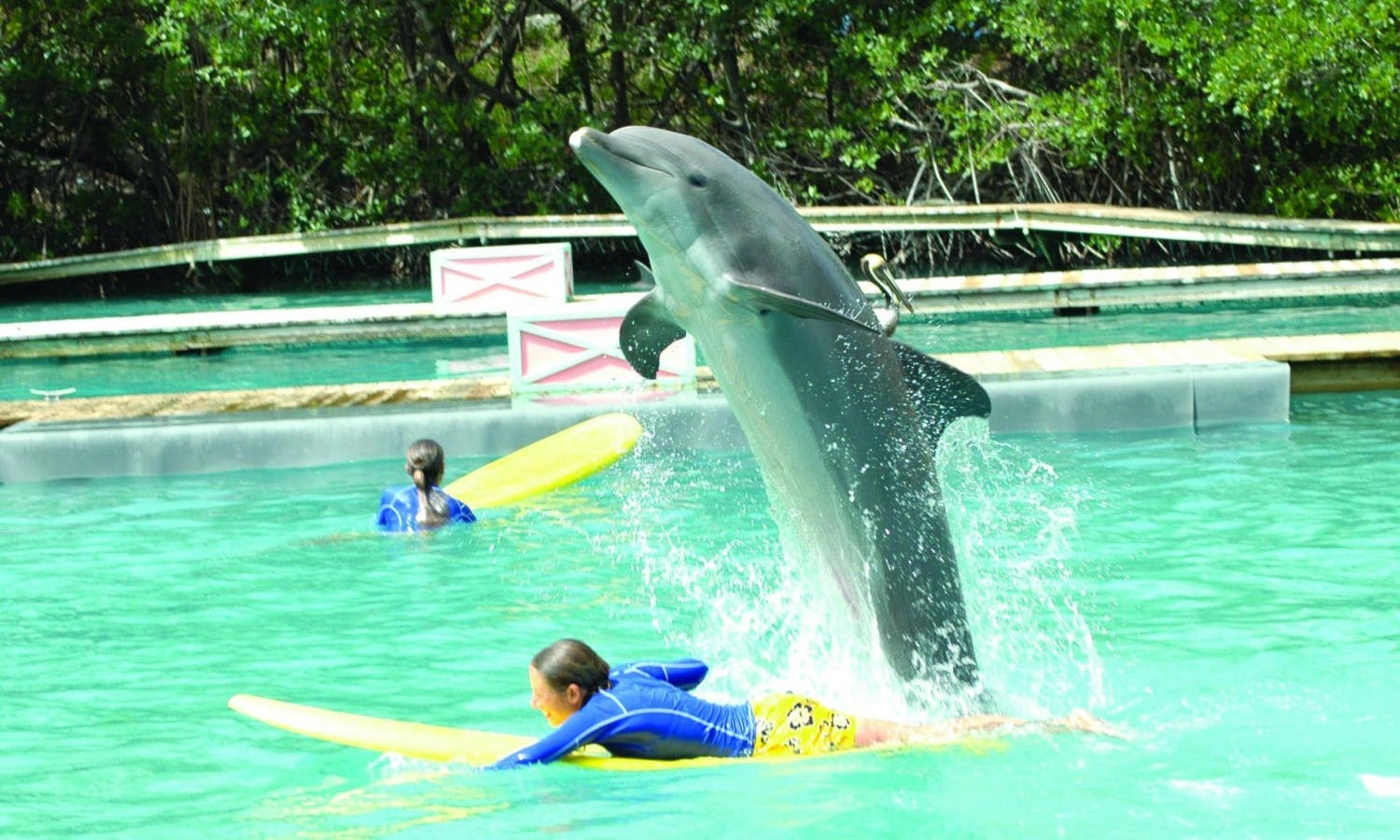 Miami Seaquarium admission tickets with transportation