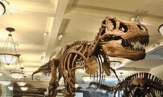 American Museum Of Natural History New York Ticket Price