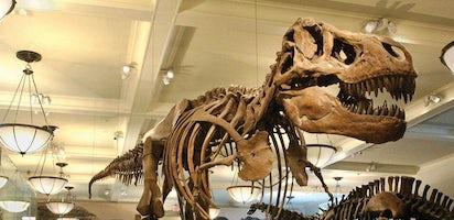 Museo Storia Naturale New York.Biglietti Per Il Museo Americano Di Storia Naturale Musement