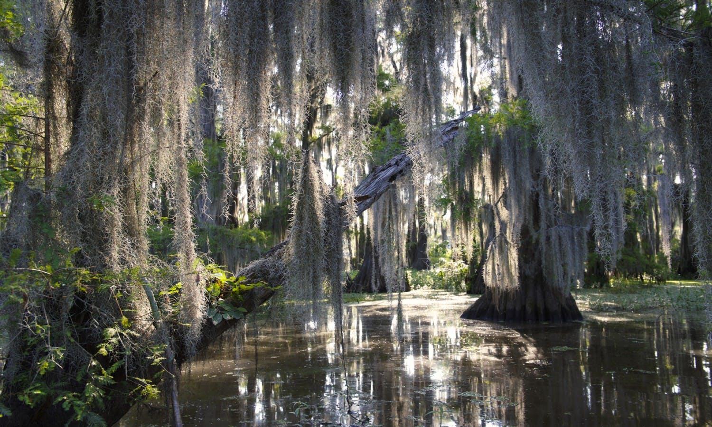 Ver la ciudad,Ver la ciudad,Actividades,Visitas en autobús,Visitas en barco o acuáticas,Actividades acuáticas,Excursión a los pantanos