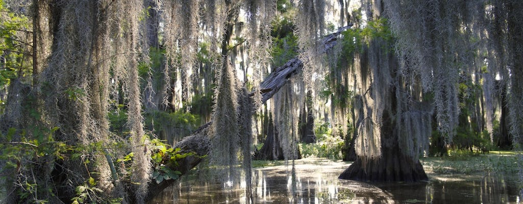 Guided swamp and bayou boat tour