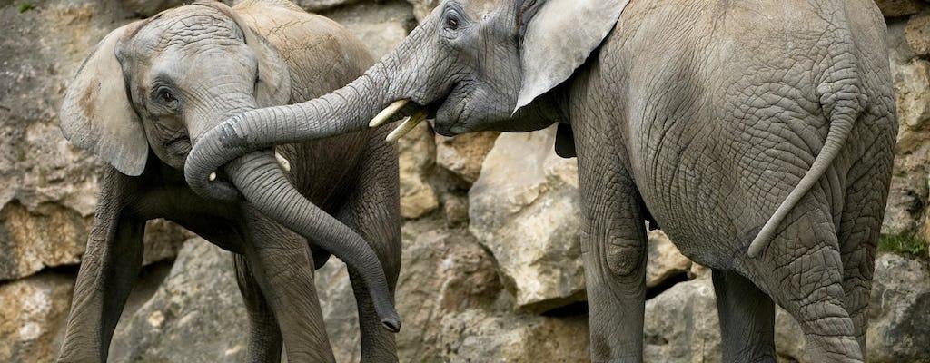 Vienna: Schönbrunn Zoo tickets