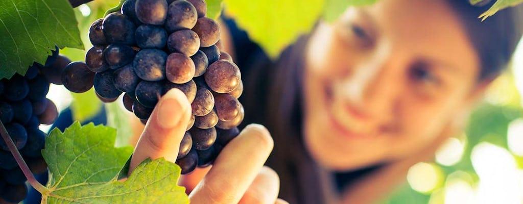 Excursión a San Gimignano, Chianti y Montalcino desde Siena con degustación de vinos y almuerzo ligero