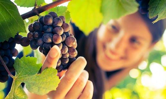 Сан-Джиминьяно, Кьянти и Монтальчино экскурсии из Сиену с дегустацией вин и легкий обед