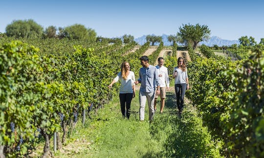 Torres Wine Cellars, Montserrat and Sitges guided tour from Barcelona