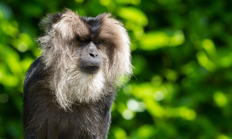 La Ménagerie, Jardin des Plantes zoo - tickets