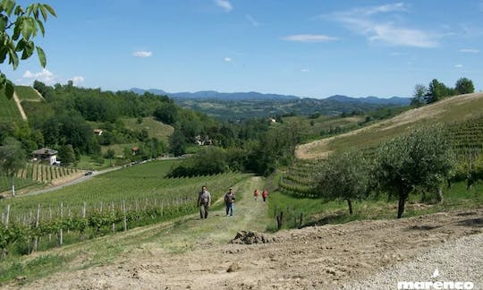 Private visit and exclusive Moscato wine tasting at Marenco's Winery in Monferrato