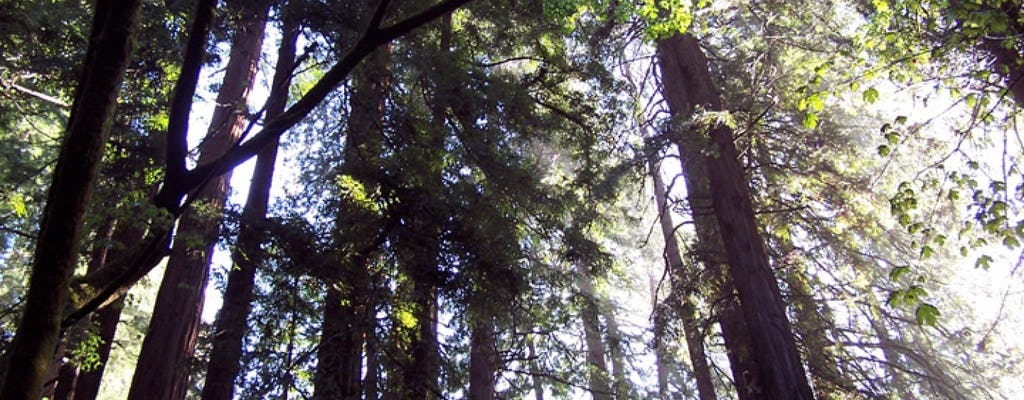 Muir Woods a la gira de secoyas costeras de California