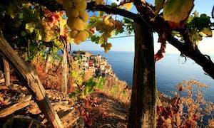 Cinque Terre DOC Wine Tasting In Manarola