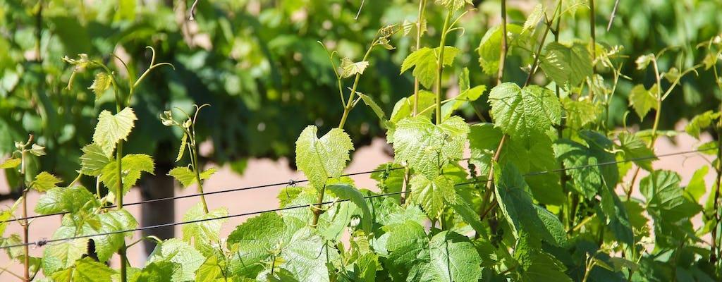 Degustazione di vini sulle pendici del Vesuvio