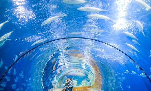Oceanogràfic and Principe Felipe Science Museum combined tickets