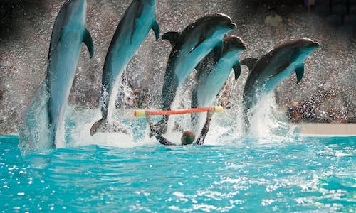 Shore Excursion: Dubai Dolphinarium