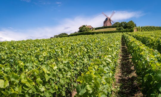 Full-day tour of the Champagne region