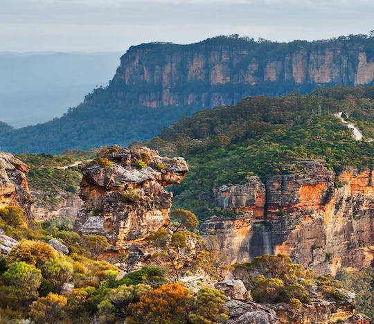 Blue Mountains and wildlife experience