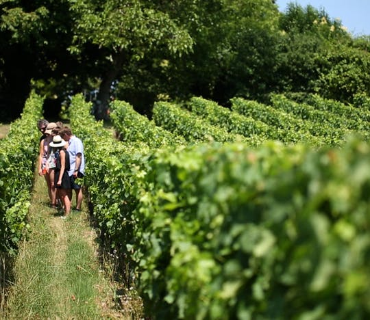 Half-day wine tour of the Medoc