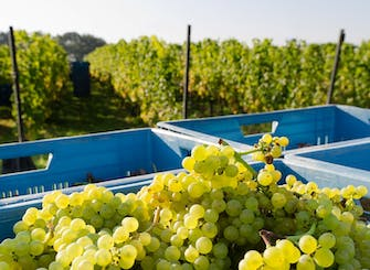 Experience the boutique family Franciacorta Winery and vineyard