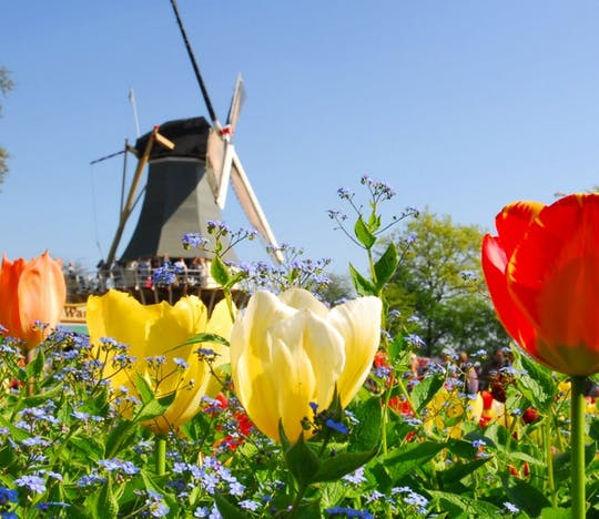 Keukenhof and flower fields guided tour from Rotterdam