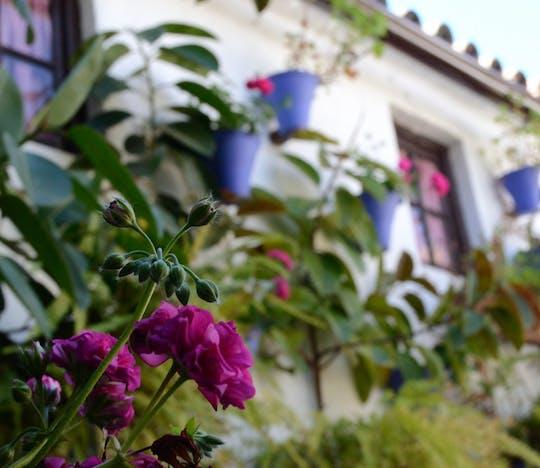 Visita guiada a los Patios de Córdoba