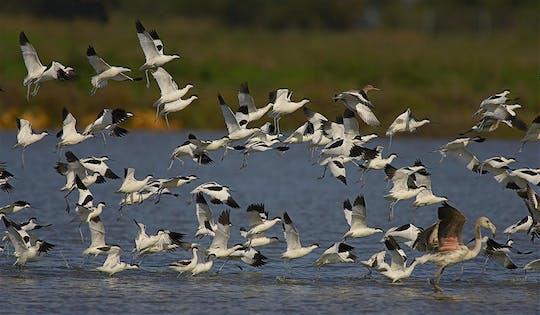 Visite guidée du Parc National de Doñana, du Rocío et de Matalascañas depuis Séville