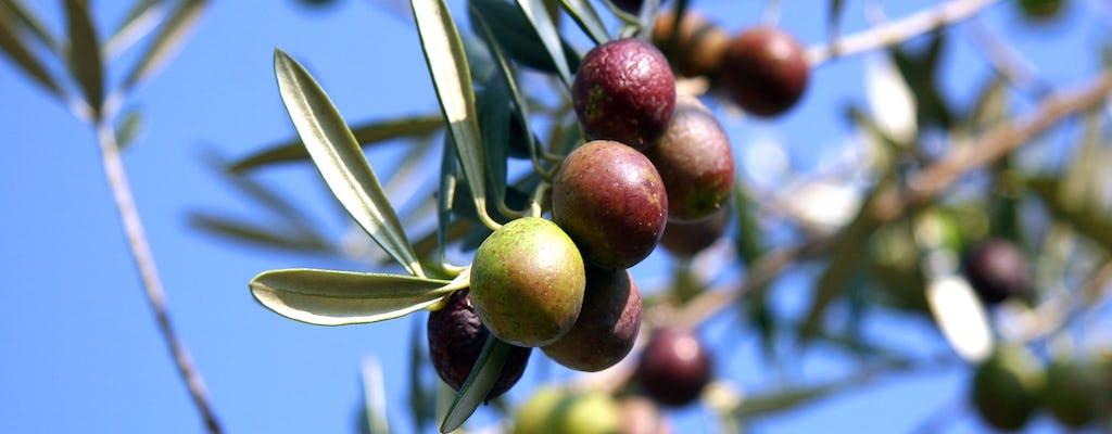 Оливковое масло ферма экскурсия из Севильи