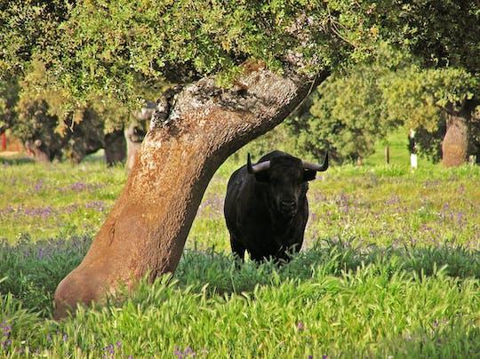 Visita guidata di mezza giornata ad un allevamento di tori con partenza da Siviglia