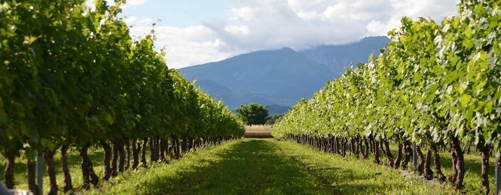 Wizyta z przewodnikiem i degustacja wina w Friuli w ekologicznej winnicy Mont'Albano
