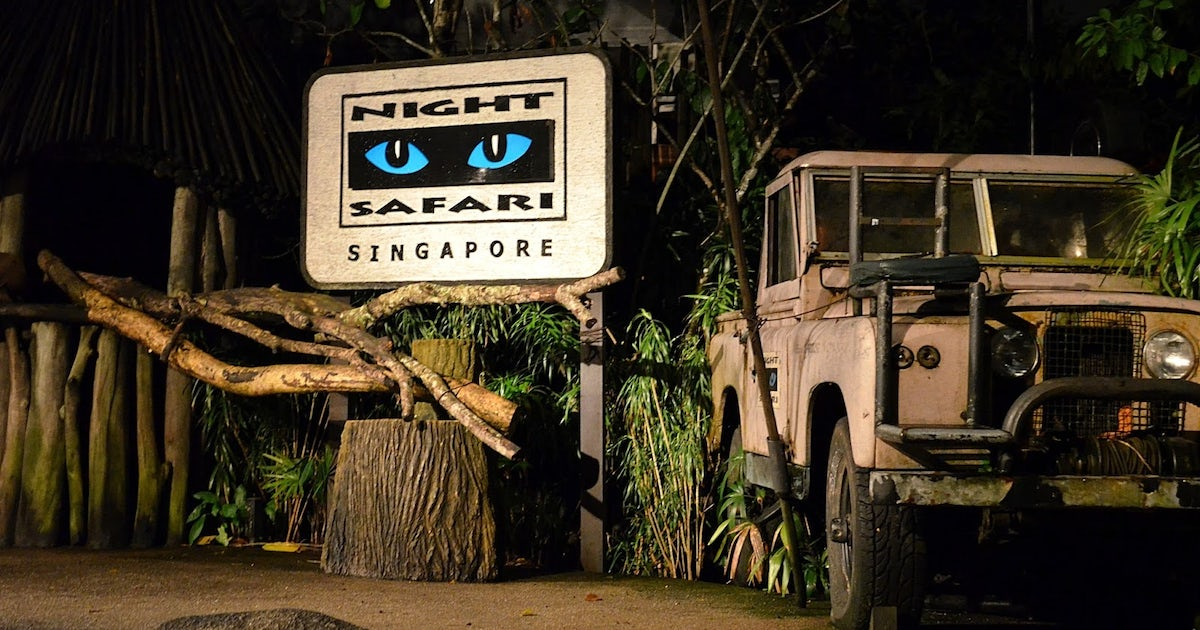 singapore zoo night safari with tram ride musement. Black Bedroom Furniture Sets. Home Design Ideas