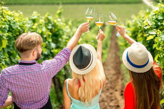 Weinbau- und Weinverkostungstour im Weingut Miquel Jane
