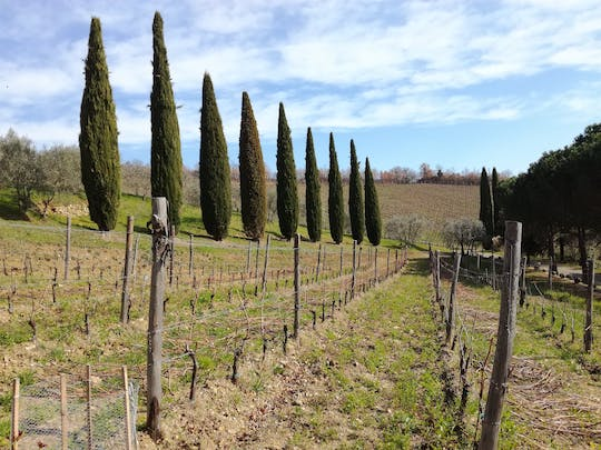 Full-day Chianti wine and Tuscan food safari