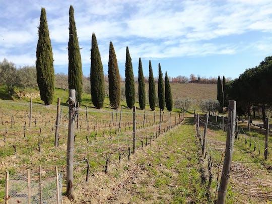 Full-day Chianti wine and Tuscan food safari